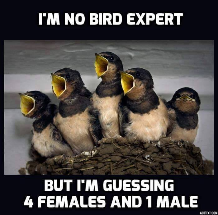Name:  Big Mouth Birds.jpg Views: 1119 Size:  54.8 KB